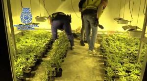marihuana-ontinyent-3-diaridigital.es