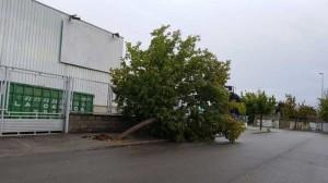 destrozos-lluvia-2